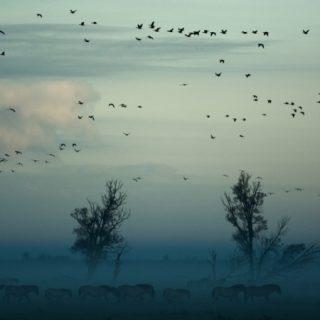 Letting go of control - Rewilding